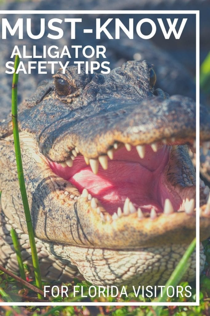 Florida Alligator Safety Tips