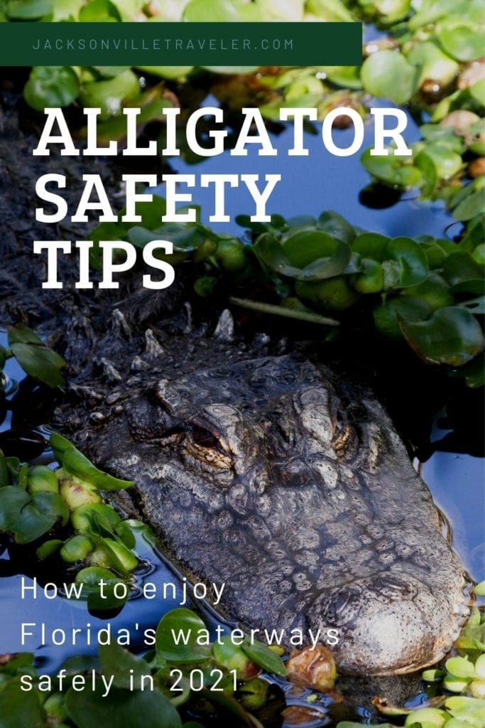 Florida Alligator Safety Guide