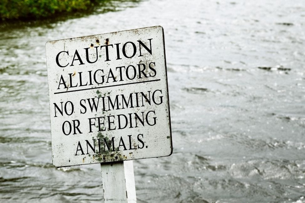 Beware of Alligators in Florida
